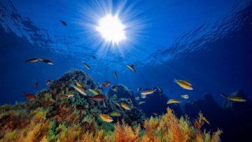 L'Eden sommerso nel mare di Ustica